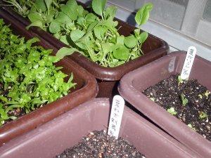 20040602planter.jpg