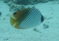 20051002fish