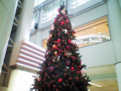 20081209tree