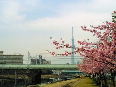 Skytree02sakura